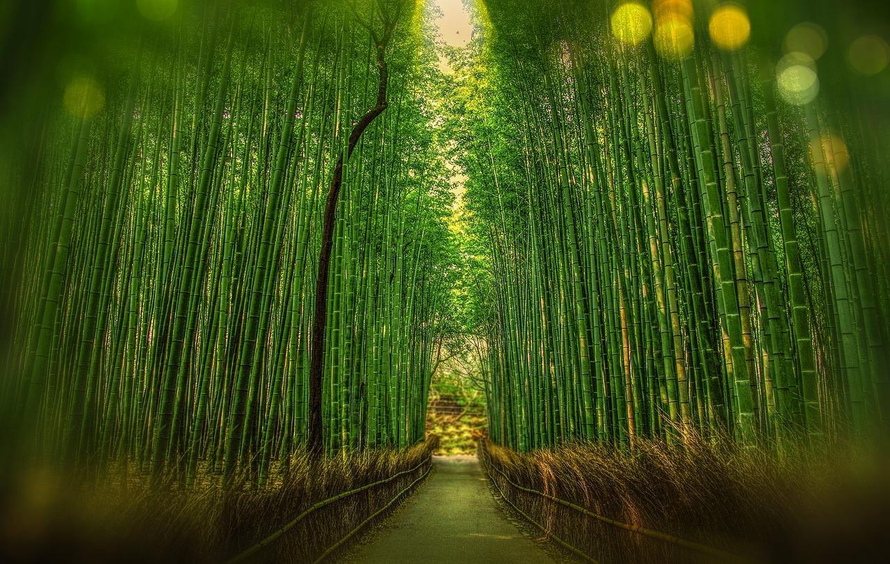 Bambou kyoto 1860521 1280