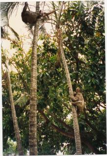 Je collecte des graines pour un herbier botanique, Amazonie ©isatisse.fr